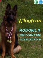 Kingfran  (FCI)